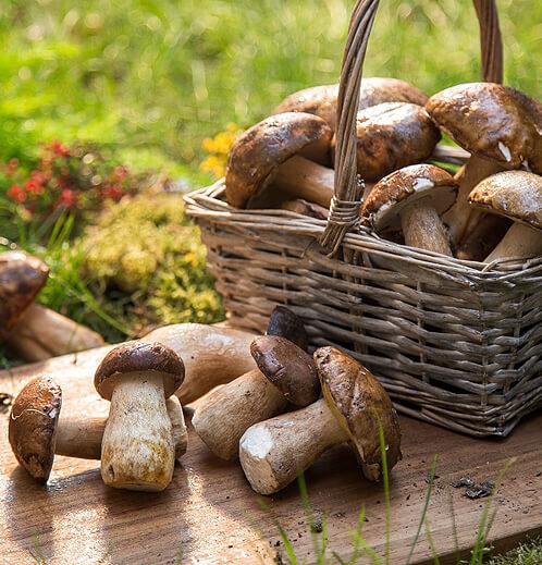 Taze Porcini 1 Kg resimleri