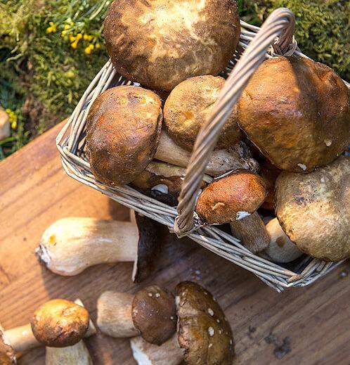 Taze Porcini 3 Kg resimleri